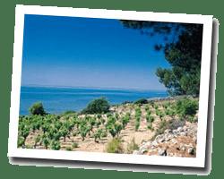 hotels am meer banyuls_sur_mer