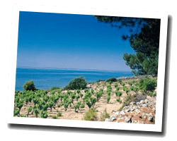 hotel vue mer banyuls_sur_mer