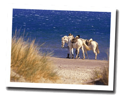 seaside holiday rentals Camargue