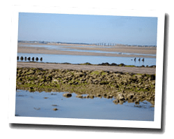 hotels am meer ile_de_noirmoutier