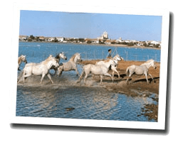 locations vue mer les_saintes_maries_de_la_mer
