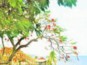 Ferienhaus am meer Pointe-Noire